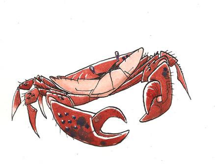 Crabe72