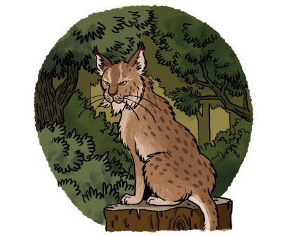 V6_Lynx